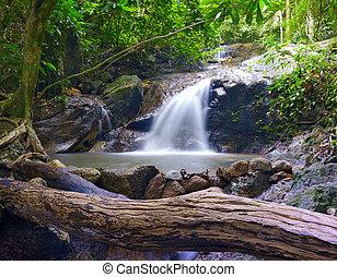 aventure, paysage, moussu, fond, arbres, beau, exotique, ruisseau, vert, usines, pierres, forêt