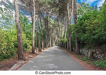 avenue, arbres