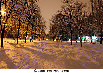 avenue at night in winter