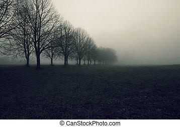 avenue, dans, brouillard