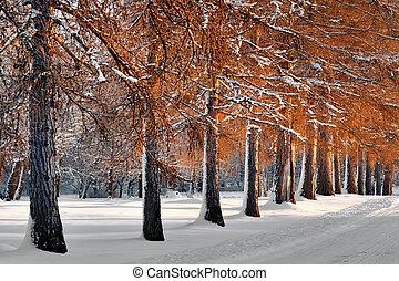 avenue, dans, hiver