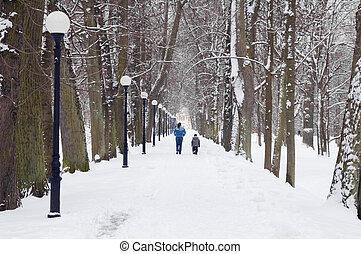 avenue, dans, les, hiver