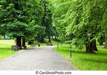 avenue, dans, les, parc vert