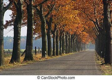 avenue in fall 01