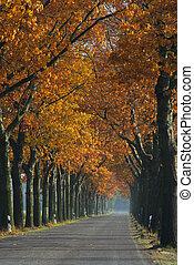 avenue in fall 04