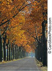 avenue in fall 05