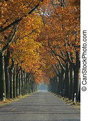 avenue in fall 06