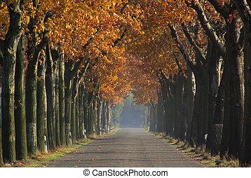 avenue in fall 08