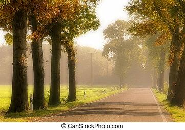 avenue in fall 16