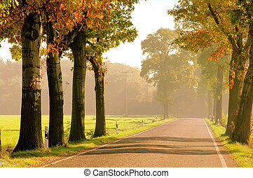 avenue in fall 20