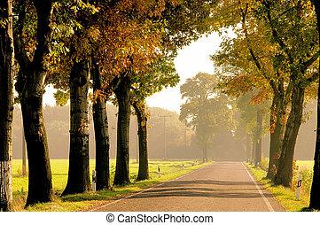avenue in fall 23