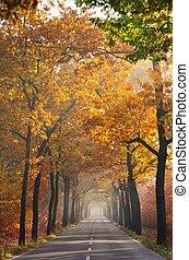 avenue in fall 24