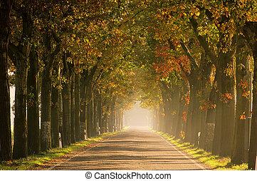 avenue in fall