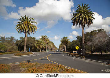 Palo Alto - Avenue in Palo Alto, California.