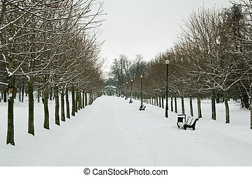 Avenue in the winter