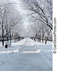 avenue in winter day