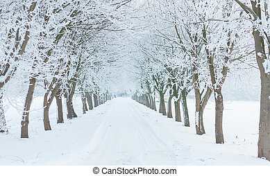 Avenue in winter with snow and trees covered with ice