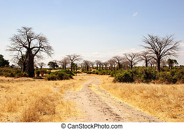 Avenue of Baobab trees - an avenue of the quintessential...