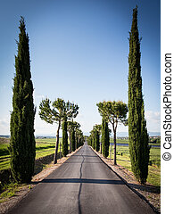 Avenue of Cypress Trees in Tuscany - A road leading to the ...