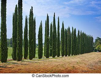 avenue of cypresses. Italy. Tivoli.