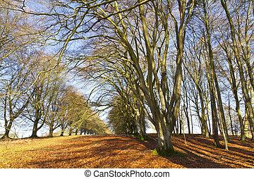 Avenue of deciduous trees in winter
