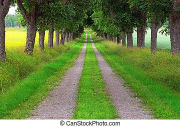 Avenue of maple trees