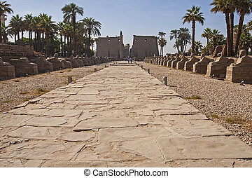 Avenue of sphinxes at entrance to ancient egyptian temple of Luxor