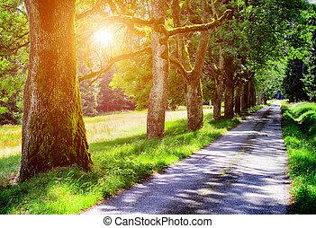 Avenue of tree