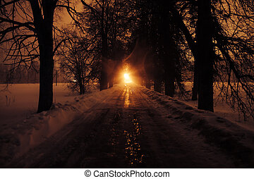 Avenue of trees at night.