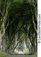 Avenue of trees Dark Hedges