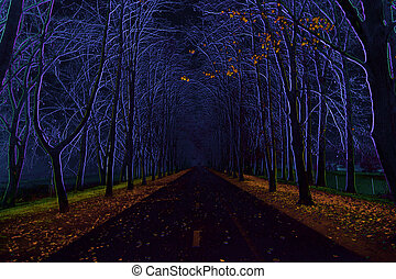 avenue of trees - Abstract image of the avenue of trees -...