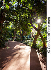 avenue of tropical trees and sun