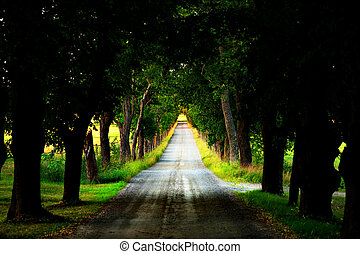 avenue with dirt road