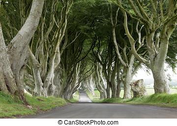 aveny, i, træer, mørke, hække