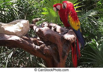 Aves - Bellas aves
