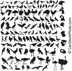 aves, colección