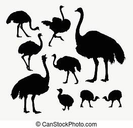 aves de corral, siluetas, animal, avestruz
