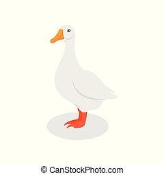 aves domésticas, doméstico, ilustração, vetorial, ganso, fundo, branca, agricultura