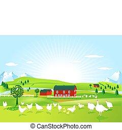 aves domésticas, fazenda