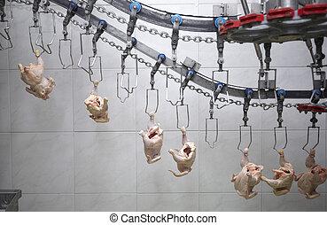 aves domésticas, indústria alimento, processando, carne