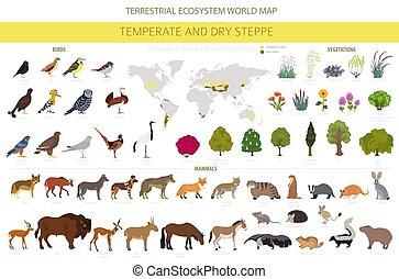 aves, ecosistema, prado, seco, templado, prarie, estepa, ...