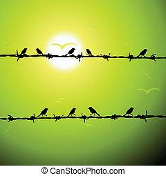aves, en, alambre, silueta