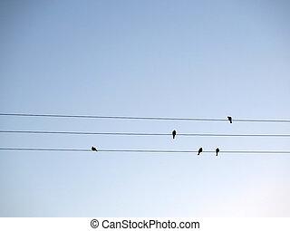 aves, en, alambres