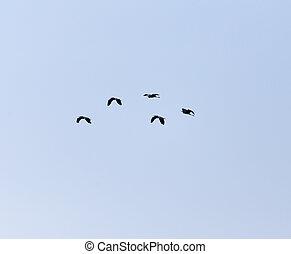 aves, en, el, cielo