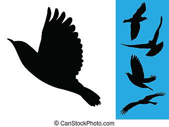 aves, en vuelo, -, vector