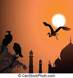 aves, sol, vista, taj mahal, agra, india