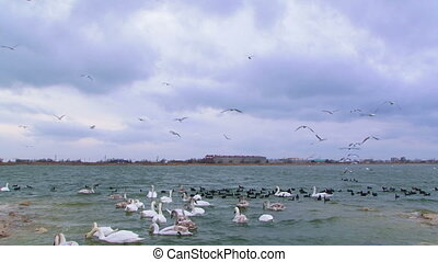 Avian chaos - Marine bay in which rests a whole flock of...