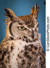 Avian, eagle owl in a sample of birds of prey, medieval fair