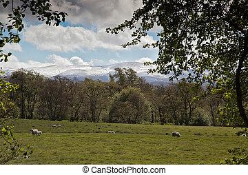 aviemore, montañas, vista, cairngorm