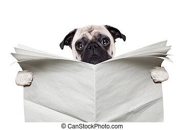 avis, hund